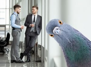 Are you working for a pigeon?