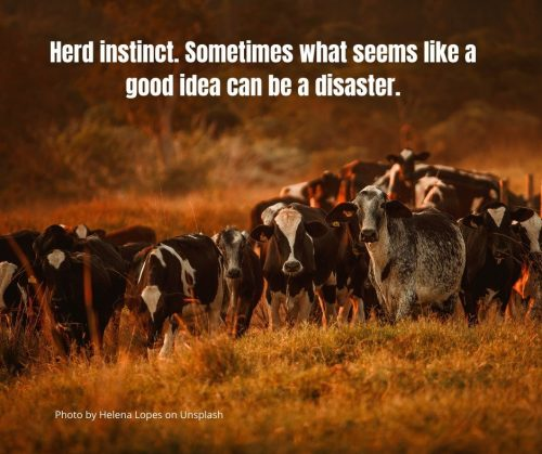 Herd instinct. Sometimes what seems like a good idea can be a disaster.